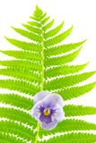 Fern leaf and flower Royalty Free Stock Images