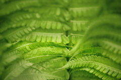 Fern leaf in the forest. Close-up stock image