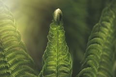 Fern leaf in the forest. Close-up royalty free stock photo
