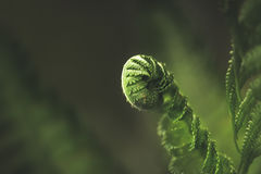Fern leaf in the forest. Close-up stock photo