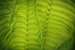 Fern leaf in the forest. Close-up stock photos