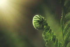 Fern leaf in the forest. Close-up stock images