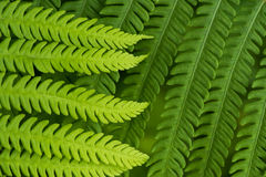 Fern leaf in the forest - green nature background Stock Photo