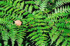 A fern leaf. In a forest on a sunny day Stock Image