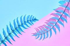 Fern Leaf fresco tropicale Estate minimo Fotografie Stock Libere da Diritti