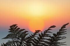 Fern leaf in front of the sunrise Royalty Free Stock Images