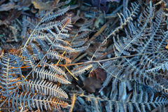 Fern leaf frost in the early morning Stock Photos