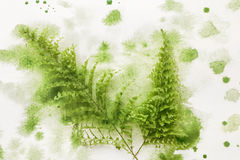 Fern leaf in green paint. On white paper Stock Photo