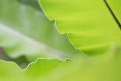 Fern leaf. Fern green leaf select focus and blur background stock images