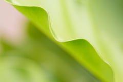 Fern leaf. Fern green leaf select focus and blur background stock image