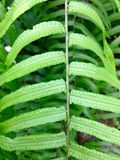 Fern leaf ground detail Stock Images