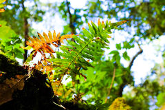 Fern leaf growth up Stock Image