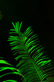 Fern leaf. Illuminated with green color light in dark Stock Photos