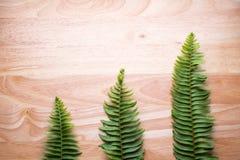Fern leaf isolated Stock Photos