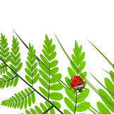 Fern Leaf and Ladybug. Over White Background, Copy space Stock Photo