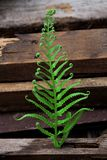 Fern leaf with Large stack of wood planks Stock Photos