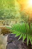 Fern leaf light Stock Photo