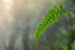 Fern leaf. A fern leaf with the light shine upon Stock Image