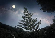 Fern leaf in the moonlight Royalty Free Stock Image