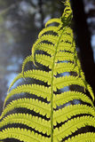 The fern leaf. Stock Images