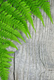 Fern leaf on the old wood Stock Photos