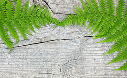 Fern leaf on the old wood Stock Images