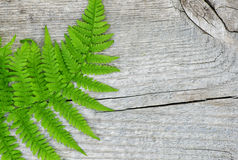 Fern leaf on the old wood Stock Photography