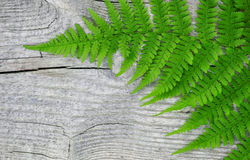 Fern leaf on the old wood Royalty Free Stock Photos