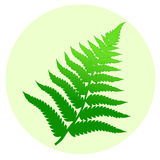 Fern leaf. One fern leaf in a circle Royalty Free Stock Image