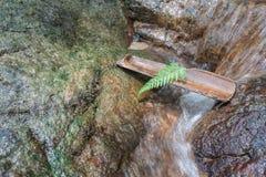 Fern Leaf op bamboe bij waterval als vakantieconcept Royalty-vrije Stock Afbeeldingen