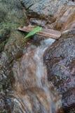 Fern Leaf op bamboe bij waterval als vakantieconcept Stock Fotografie