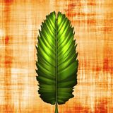 Fern leaf on papyrus. Background illustration of plant leaf on fibrous material Stock Image