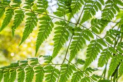 Fern leaf pattern. With bokeh in the background Stock Images