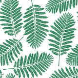 Fern leaf pattern Royalty Free Stock Images