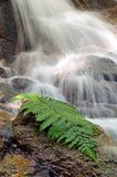 Fern leaf on a rocky. With waterfall background Royalty Free Stock Image