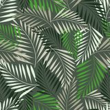 Fern leaf seamless pattern. Abstract fern leaf seamless pattern Stock Photos