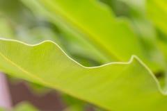 Fern leaf Royalty Free Stock Images