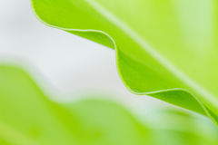 Fern leaf select focus. Fern is green leaf for fresh up your life stock photo
