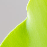 Fern leaf select focus. Fern is green leaf for fresh up your life royalty free stock photography
