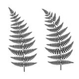 Fern Leaf Set. On White Background. Vector Illustration Stock Images