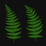 Fern Leaf Set vert Photos stock