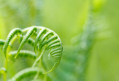 Fern leaf with shallow focus Stock Image