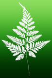 Fern Leaf Silhouette bianco Fotografie Stock Libere da Diritti