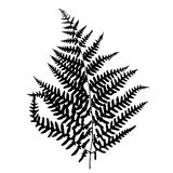 Fern leaf silhouette. Vector illustration Royalty Free Stock Photo