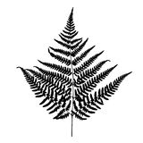 Fern leaf silhouette. Royalty Free Stock Photography