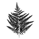 Fern leaf silhouette. Royalty Free Stock Photos