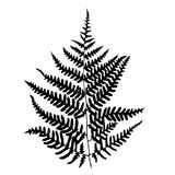 Fern leaf silhouette. Vector illustration Stock Photos