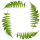 Fern Leaf Symbol. Four green fern leaves forming a square symbol, symbolizing recycling over white background Royalty Free Stock Photos