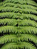 Fern leaf texture background Stock Photos