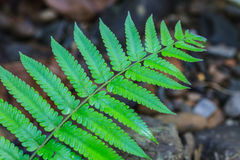 Fern leaf texture Stock Photo